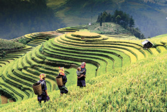 Indochina Insider Journeys