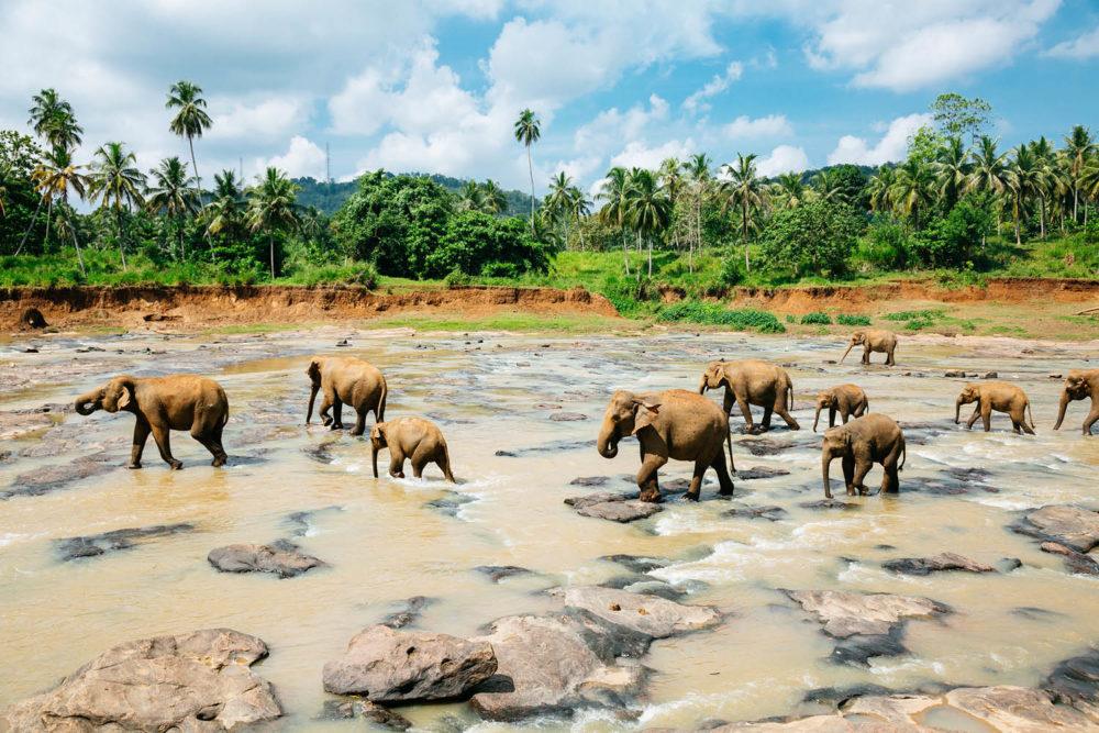 Go on an Elephant Safari