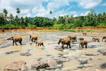 Go on an Elephant Safari
