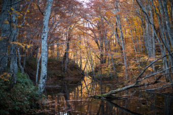 Forest with autumn leaves and river