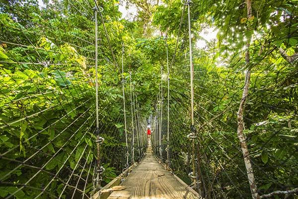 Rope bridge in rainforest