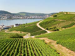 Rudesheim Vineyard