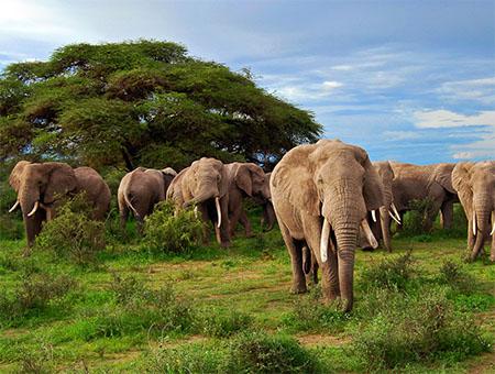 African safari, Africa