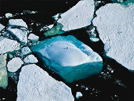 Arctic, Antarctica