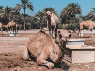 Insider guides to the Middle East